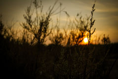 Blumen im Sonnenuntergang Stockbild