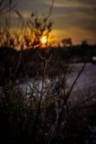 Blumen im Sonnenuntergang Lizenzfreies Stockfoto