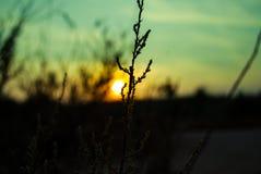 Blumen im Sonnenuntergang Lizenzfreie Stockfotos