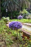 Blumen im Stadtpark in Marbella-Provinz Màlaga Andalusien Spanien Lizenzfreie Stockbilder