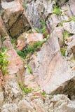 Blumen im Stein Stockfoto