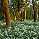 Blumen im Wald Lizenzfreie Stockfotografie