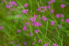 Blumen im Wald Lizenzfreie Stockbilder