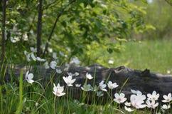 Blumen im Wald Lizenzfreies Stockfoto