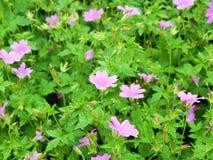 Blumen im Wald in der Mitte parkt Nottingham Großbritannien Stockbilder
