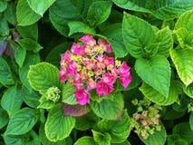 Blumen im Wald in der Mitte parkt Nottingham Großbritannien Stockfotos