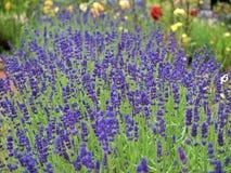 Blumen im Wald in der Mitte parkt Nottingham Großbritannien Lizenzfreie Stockfotografie