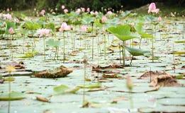 Blumen im Wasser Stockbilder