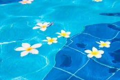 Blumen im Wasser Stockbild