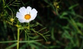 Blumen ist erneuernd und schön Stockfotografie