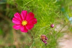 Blumen ist erneuernd und schön Stockbild