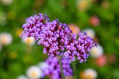 Blumen ist erneuernd und schön Stockfoto