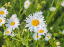 Blumen ist immer Glück Lizenzfreies Stockbild