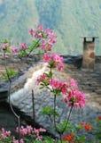 Blumen in Italien Stockfotografie
