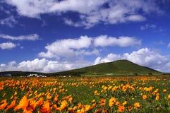 Blumen-Jahreszeit Lizenzfreie Stockfotografie