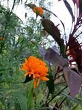 Blumen-Klicken stockfoto