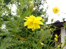 Blumen-Klicken lizenzfreies stockbild