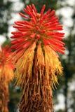 Blumen-Kopf Lizenzfreie Stockbilder