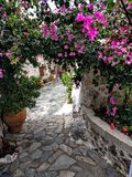 Blumen in Kreta Lizenzfreie Stockfotos