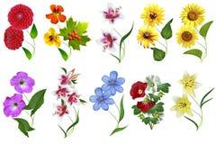 Blumen lokalisiert auf weißem Hintergrund Stockfotografie