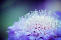Blumen-Märchenland Lizenzfreie Stockfotos
