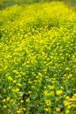 Blumen-Meer Lizenzfreie Stockfotos