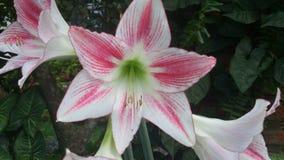 Blumen an meinem Garten Lizenzfreie Stockfotografie