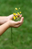 Blumen in meinen Händen Lizenzfreies Stockbild