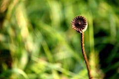 Blumen-Minimalismus lizenzfreie stockbilder