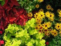 Blumen-Mischung Stockfotos