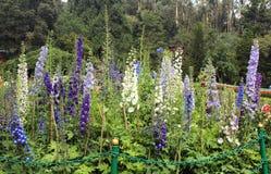 Blumen mit Bäumen Stockfotografie