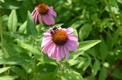 Blumen mit Biene stockbilder