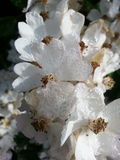 Blumen mit dem Morgen passend Stockfotos