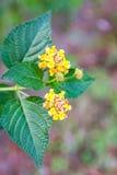 Blumen mit grünen Blättern Lizenzfreie Stockfotos