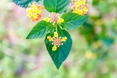 Blumen mit grünen Blättern Lizenzfreie Stockbilder