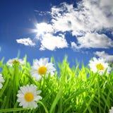 Blumen mit grasartigem Feld auf blauem Himmel Stockfoto