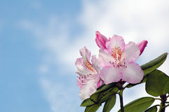 Blumen mit Himmelhintergrund Lizenzfreie Stockfotografie