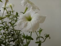 Blumen mit 9k Entschließung 65mpx Lizenzfreie Stockfotos