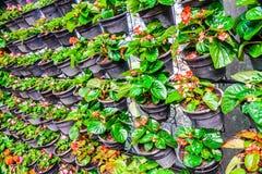 Blumen mit Plastikvasenfall in der Reihe Stockfotografie