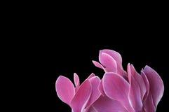 Blumen mit Platz Lizenzfreies Stockfoto