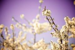 Blumen mit purpurrotem Hintergrund Lizenzfreies Stockfoto