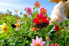 Blumen mit Schmetterling im Garten Stockbild
