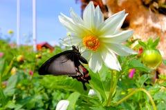 Blumen mit Schmetterling im Garten Stockfotografie
