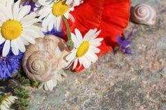 Blumen mit Schneckenhäusern Stockbilder