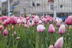 Blumen mit Tropfen lizenzfreies stockbild