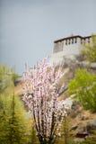 Blumen mit unscharfer Ansicht des Potala-Palasts, Lhasa Lizenzfreies Stockbild