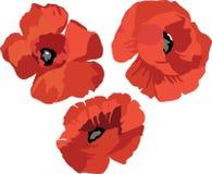Blumen-Mohnblumensatz Lizenzfreie Stockbilder