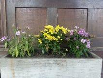 Blumen am Morgen Lizenzfreie Stockfotos