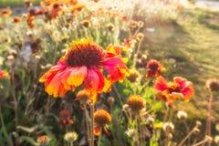 Blumen-Morgen-Licht Stockfotografie