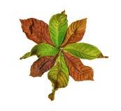 Blumen-Muster des trockenen Blattes Lizenzfreies Stockbild